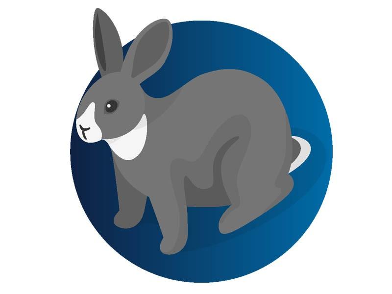 Rabbits Vaccines